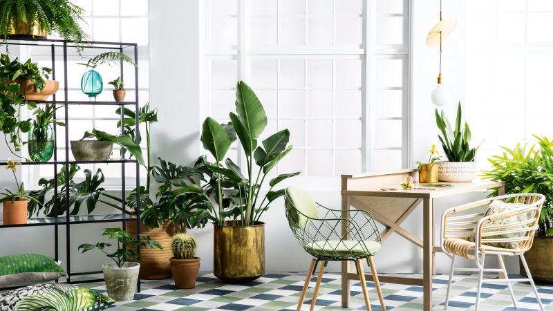 spring-botanicals-indoor-plants-greenery-expert-tips-sam-mcadam-cooper-joseph-gardner-danielle-selig-sept-15-20150915124112q75dx800y-u1r1g0c