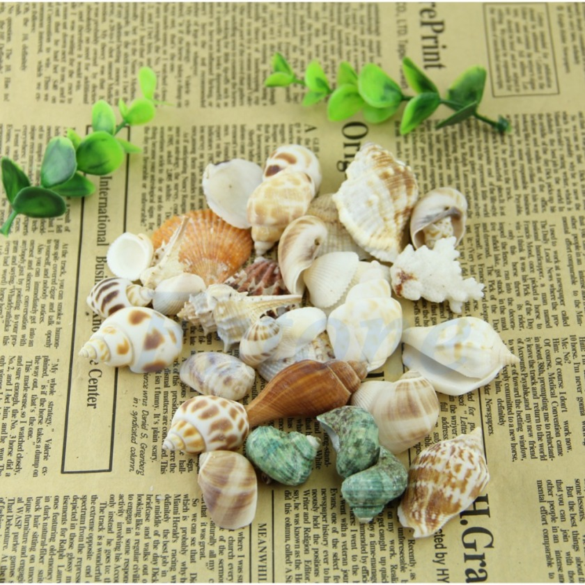 Aquarium-100g-Collect-Mixed-font-b-SeaShells-b-font-Beach-Sea-Shells-Craft-Shell-font-b