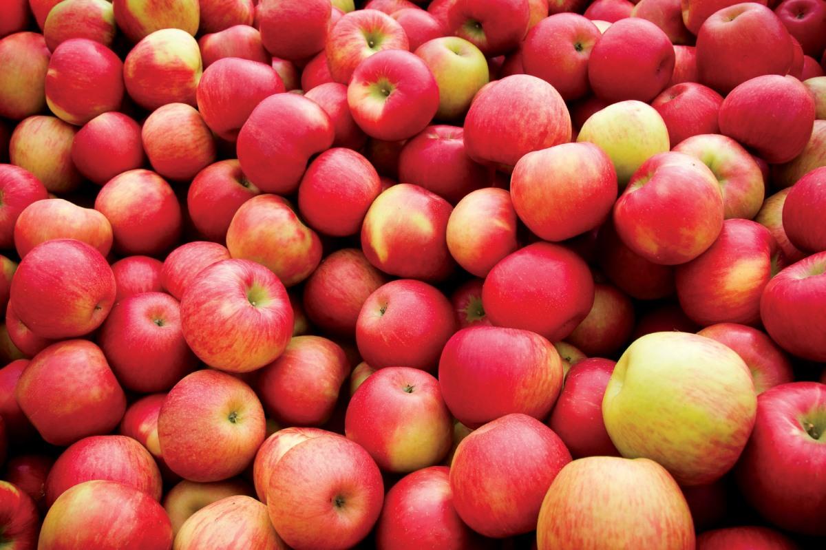 Autumn Apple Recipes!