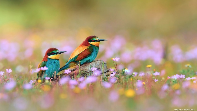 birds-wallpapers-for-mobile_3